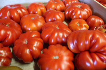 Tomaten_HofladenKlug