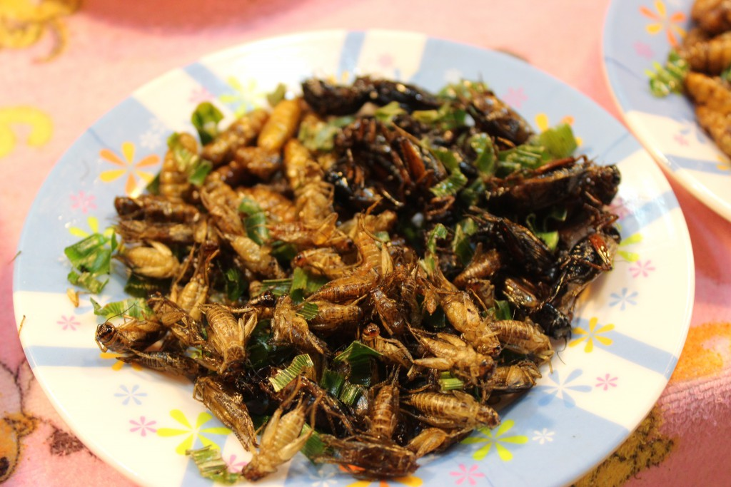 Insekten Thailand
