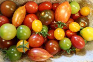 Tomaten im Hofladen Klug2