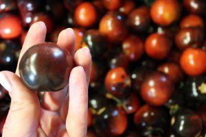 Hofladen Klug / Tomaten