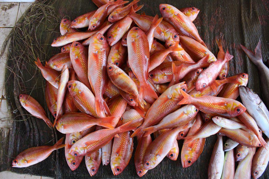 Muscat_Fischmarkt