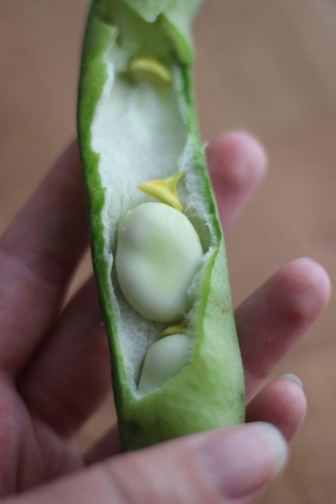 Kamut-Salat